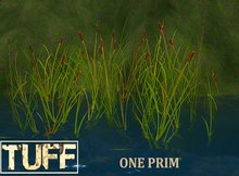 DD [TUFF] Cattails